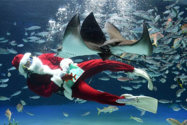 JAPAN-CHRISTMAS-AQUARIUM-SANTA